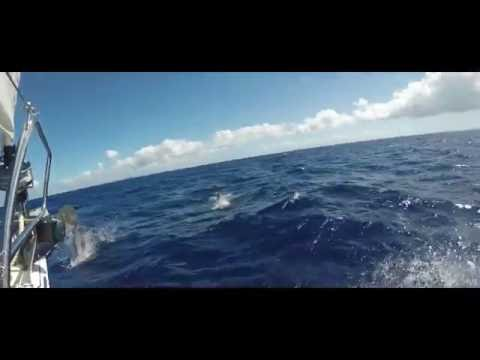 Guadeloupe and Dominica Sail 2016 in 4K!