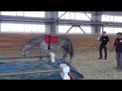 Бизнес тренинг с лошадьми eahae.ru