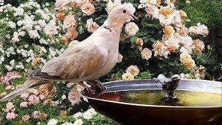 4K-Amazing Nature Video - Beautiful Flowers, Animals And Birds