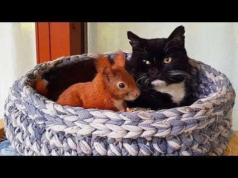 Смотреть Удивительная история неразлучных белки и кошки онлайн