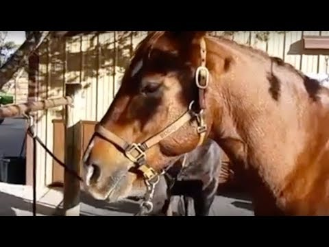 f4d04852a95 Julie Goodnight  Orange halters for visibility on the trail - YouTube