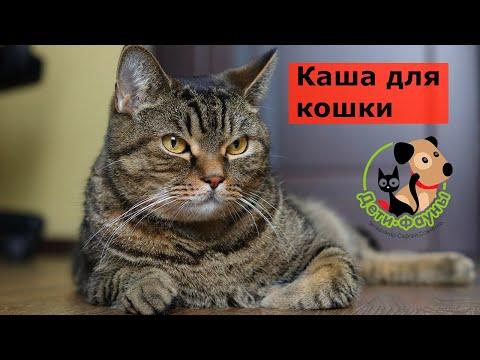Можно ли кошке давать кашу?