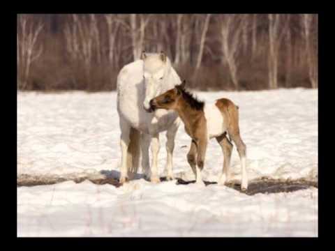 фото якутские лошади