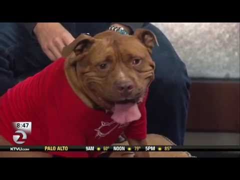 Meaty the Pitbull joins Mornings on 2