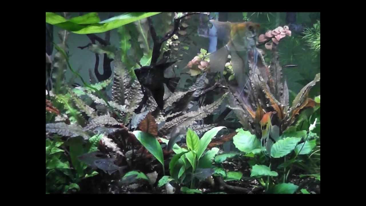 New Marineland LED plant light on 75 gallon angelfish