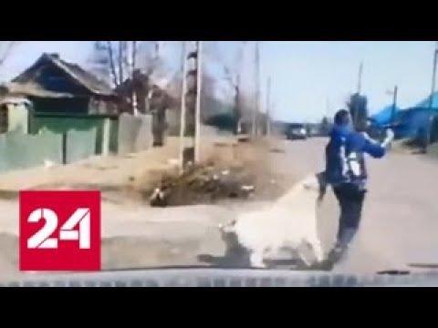 Спасли от зубов гигантского пса: нападение агрессивной собаки на школьника попало на видео - Росси…