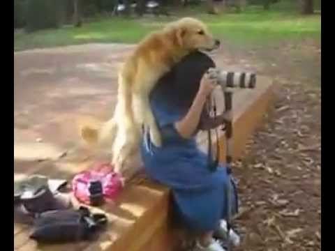 Dog and girl sex videos