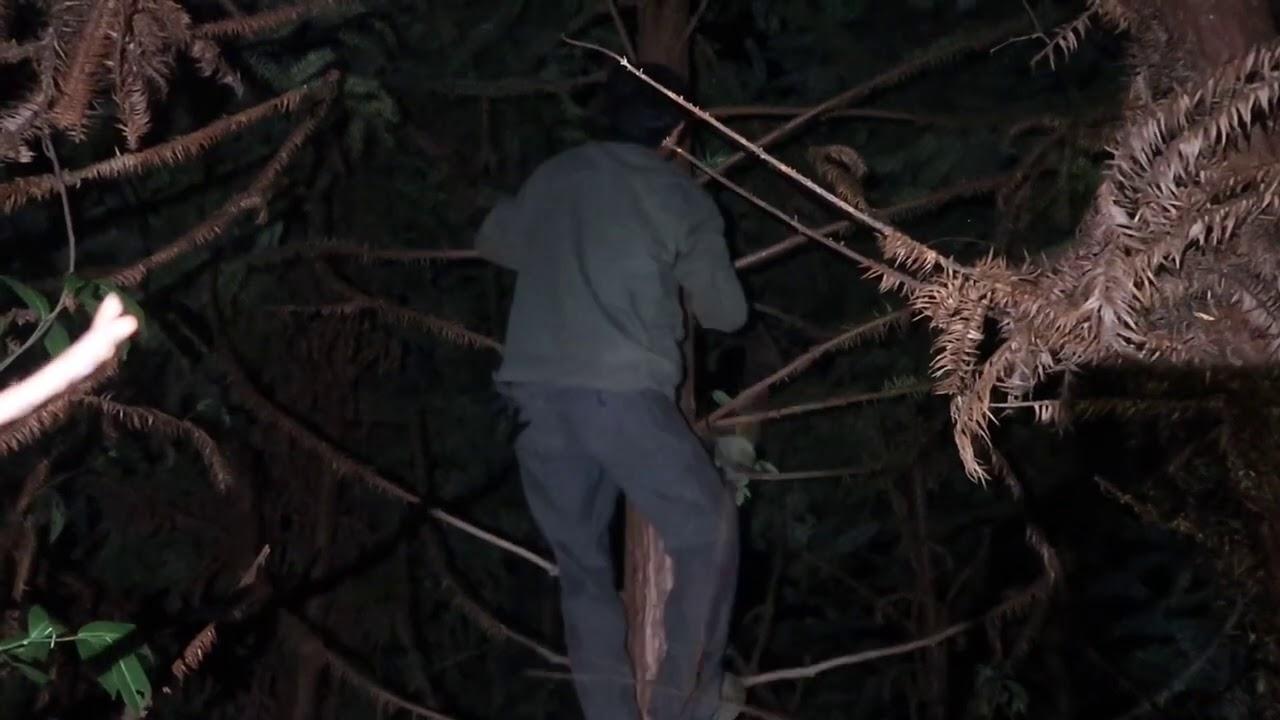 """小婷晚上拍视频有大事发生,全家出动抓""""野鸡"""",爸爸还爬树抓"""