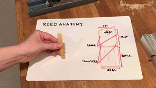 Reed Anatomy