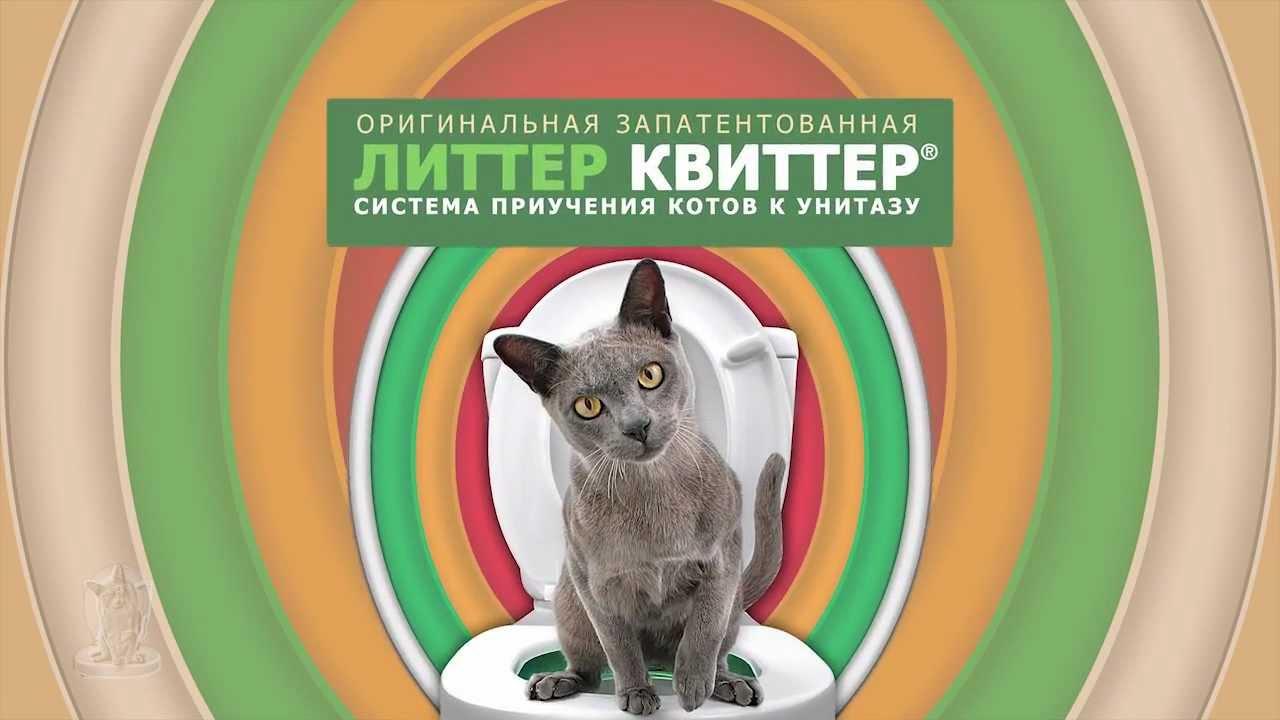 Кошка не пачкается;. Не распространяются запахи;. Наполнитель нужен только на первых порах. Недостатки: не всех кошек можно приучить ходить на унитаз, эти животные любят более укромные уголки, чем сравнительно большая площадь туалета;.