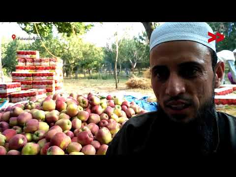 Apple Growers of the Kashmir Valley Aggrieved Over Low Market Rate of Apples | Rayees Reports