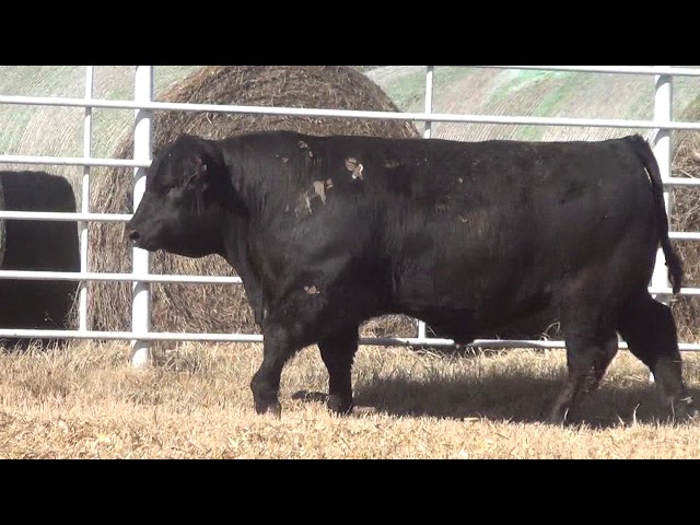 Express Ranches Lot 341