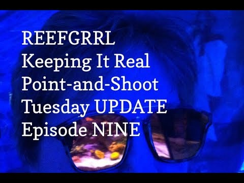 reefgrrl's-red-sea-xl-425---point-and-shoot-tuesday-update---episode-nine---november-13,-2018