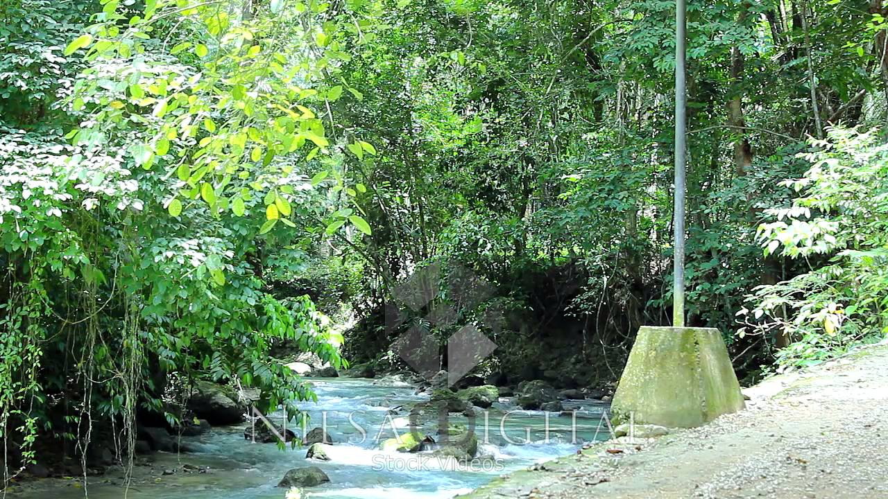 Hd Video Background Loops Tropical Nature Stream P039 Video