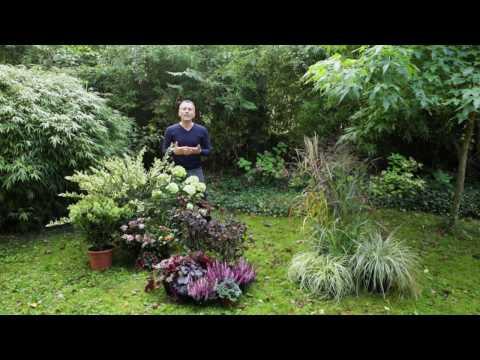 plantes fleuries en automne buzzpls com. Black Bedroom Furniture Sets. Home Design Ideas