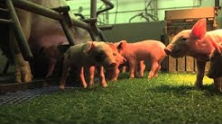 Boeiende Boeren afl. 5 / Speed dating voor varkens