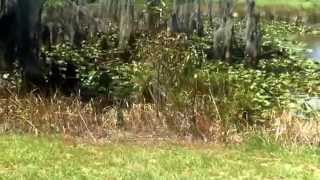 Sinkhole in Lowndes County, Hahira, Ga (Sank on 8/5/15)