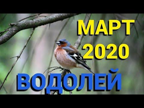 ВОДОЛЕЙ МАРТ 2020. ТАРО ПРОГНОЗ. САМЫЕ ВАЖНЫЕ И ГЛАВНЫЕ СОБЫТИЯ МАРТА 2020г. Онлайн гадание.
