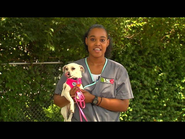 All About Pets - 8/16/18 Paw Pad Burns, Britteny Hill, MS, LVT, Internal Medicine Nurse Tech