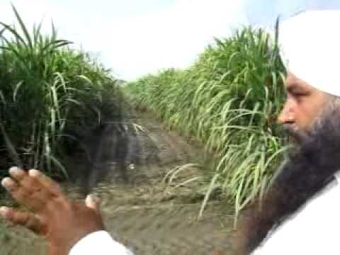 SugarCane farming-Pingalwara Farm -ATMA Officials Visit.mp4