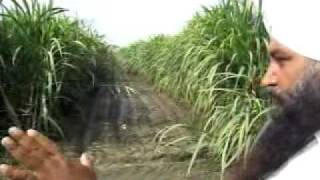 SugarCane farming-Pingalwara Farm -ATMA Officials Visit.mp4