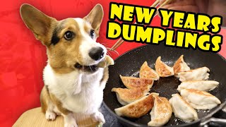 Corgi's Pan Fried Chicken Dumplings for Lunar New Year || Life After College