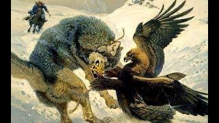 Đại Bàng Vàng & Những Trận Đi Săn Kinh Điển