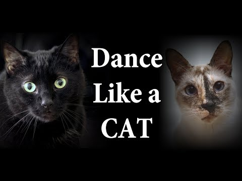 Dance Like a Cat Lyric Version