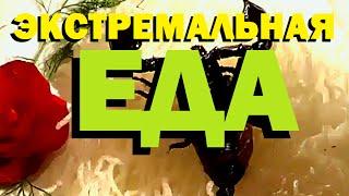 Галилео  Экстремальная еда