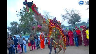 Rajasthani Songs Marwadi Marriage 2019 Indian Wedding Dance performance
