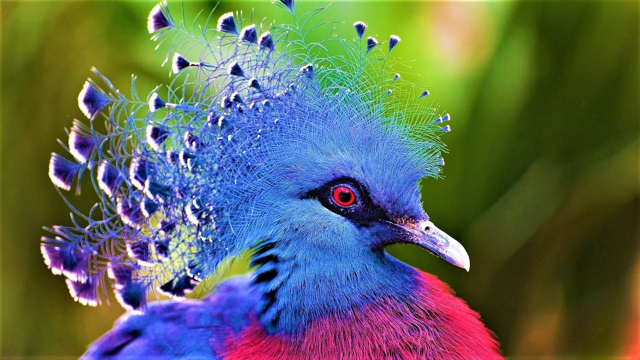 10 Most Beautiful Birds on Planet Earth 2