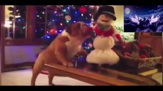 Video Funny 3 : Animals and lovely actions