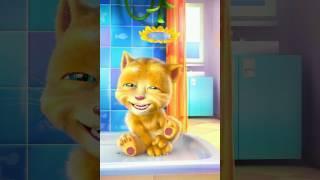 kucing lucu ginger