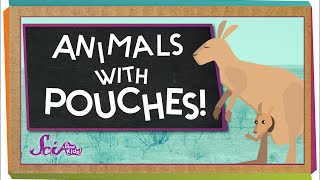 Animals With Pouches!