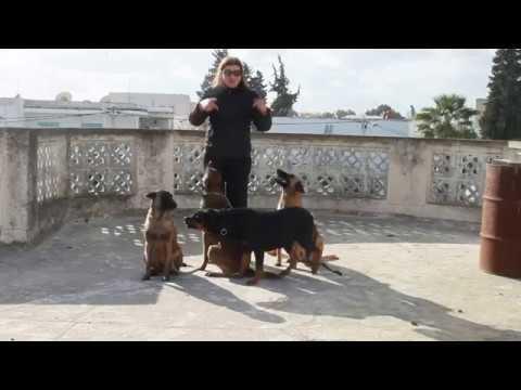 dressage de chien tunisie مع أطيب الأماني 2017 - YouTube