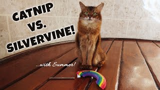 SUMMER JUDGES CATNIP VS SILVERVINE! Cats, Catnip and Matatbi Sticks