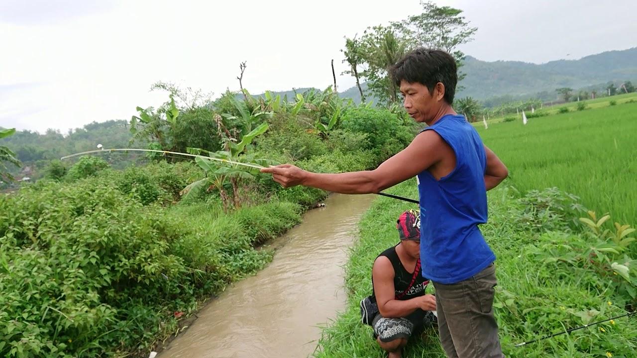 Mancing di sungai tengah sawah - YouTube