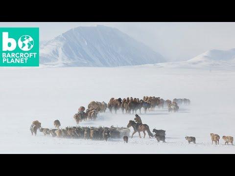 Extreme Living: Inside Mongolian Nomads' Gruelling Spring Migration