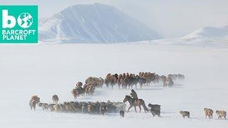 Video Extreme Living: Inside Mongolian Nomads' Gruelling Spring Migration download MP3, 3GP, MP4, WEBM, AVI, FLV Oktober 2018