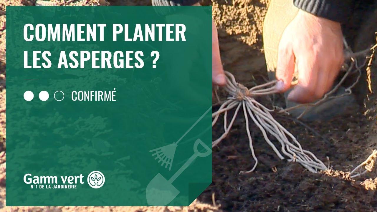 Comment Planter Des Asperges [tuto] comment planter les asperges ? - jardinerie gamm vert