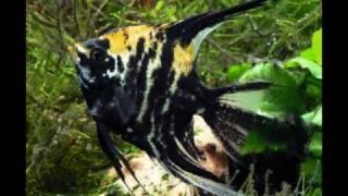 diferentes clases de peces