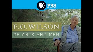 E.O WILSON: Of Ants and Men