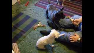 Puppies Play Time