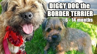 Diggy Dog  the crazy BORDER TERRIER  His 1st year compilation 6  14 months