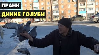 Пранк (Розыгрыш) Дикие голуби