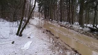 Дорога от киевского шоссе к поселку института Полиомиелита.