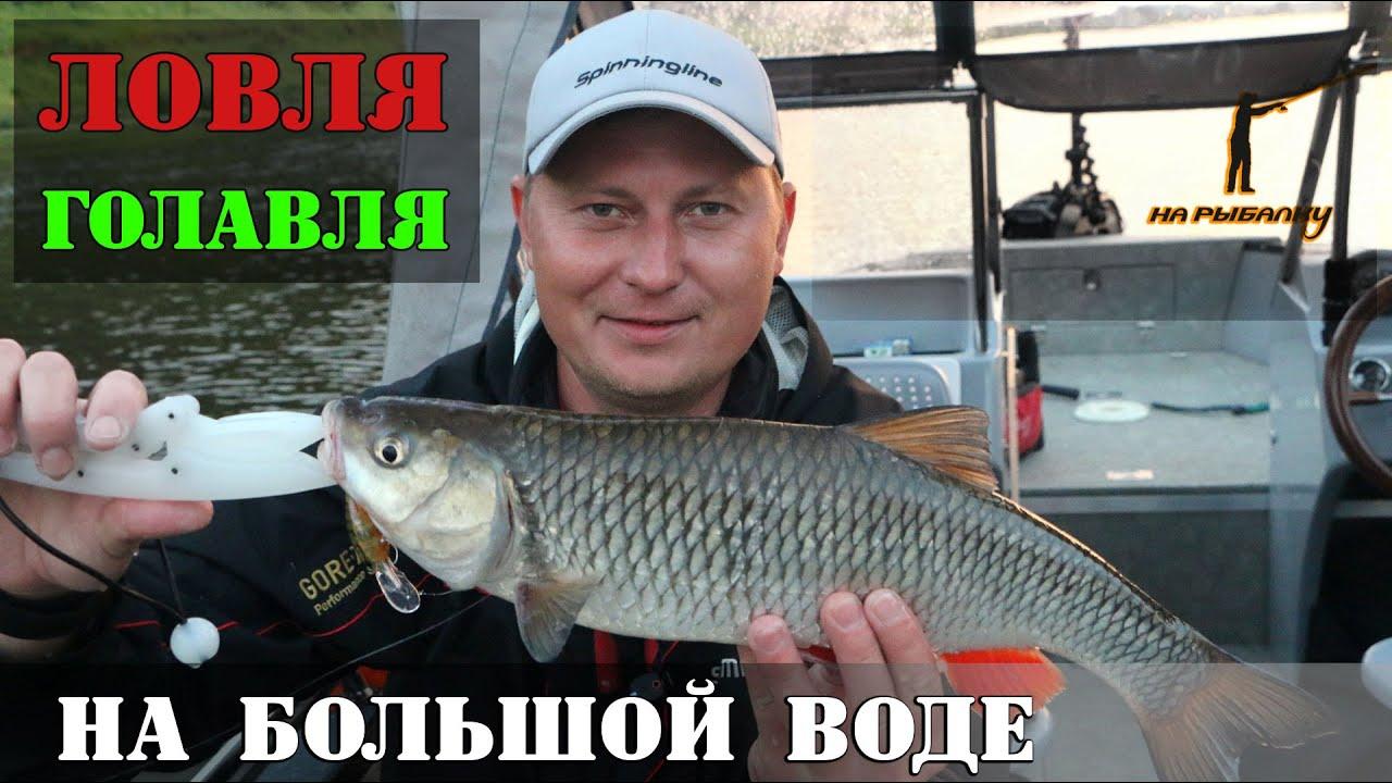 Ловля голавля на большой воде : где, как и на что? НР #2
