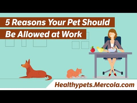 5 Reasons Your Pet Should Be Allowed at Work