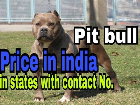 Pit bull price in india in states with contact no. ||part 2 ||dogs biography