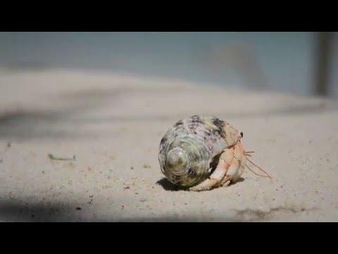 Marine Debris Challenge   Cousin Island